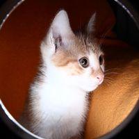 Katy, a cicánk