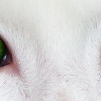 3+1 módszer a zöld szemű szörny legyőzésére