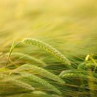 Technológiai korszerűsítésre és új felfogásra van szükség az agráriumban