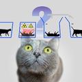 A macskák és a kvantummechanika