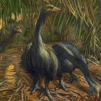 Az ember irthatta ki a valaha élt legnagyobb madarakat