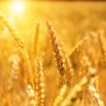 A globális élelmiszergondok megoldását keresi százharminc tudományos akadémia
