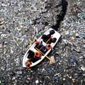Ázsiából származó műanyaghulladékok borítanak be egy mindentől távol eső atlanti-óceáni szigetet
