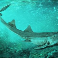 A nyolcvanas évek egyik népszerű videójátékáról neveztek el egy ősi cápafajt