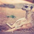 A fővárosi állatkert is csatlakozott a biológiai sokféleséget védő nemzetközi koalícióhoz