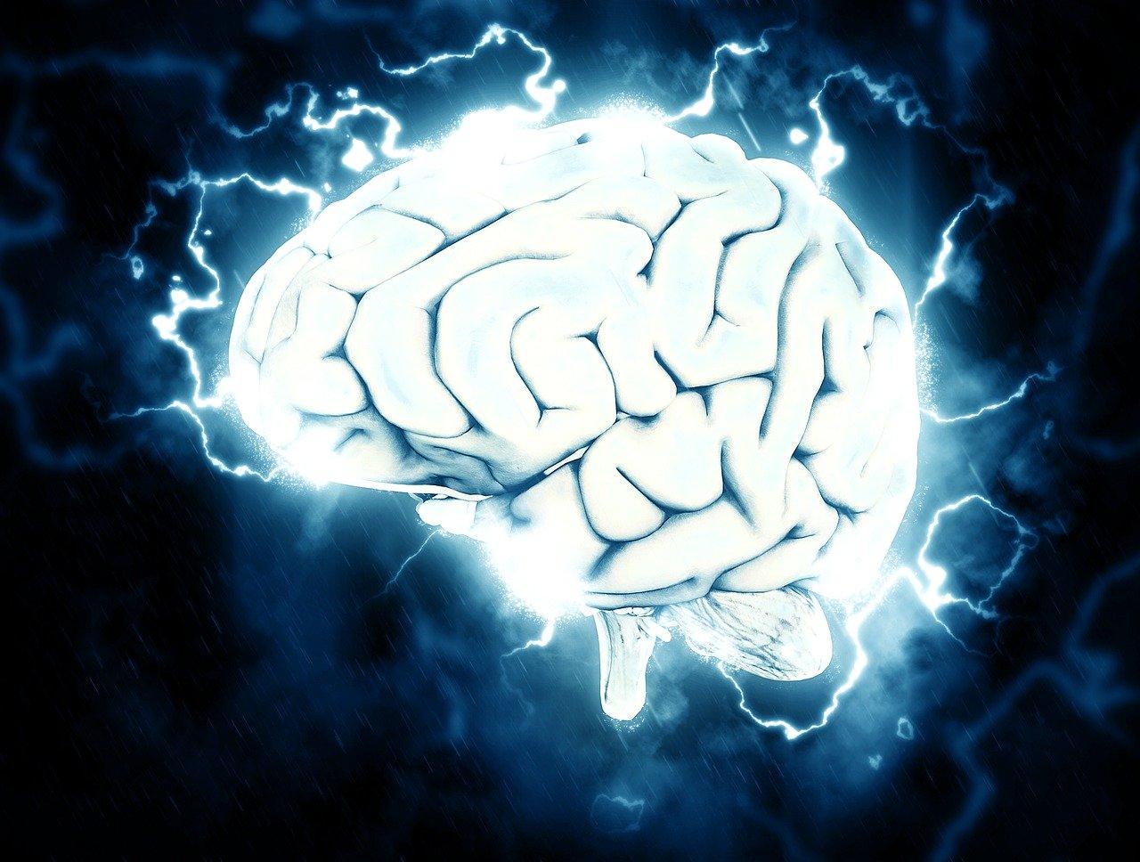 brain-1845962_1280.jpg