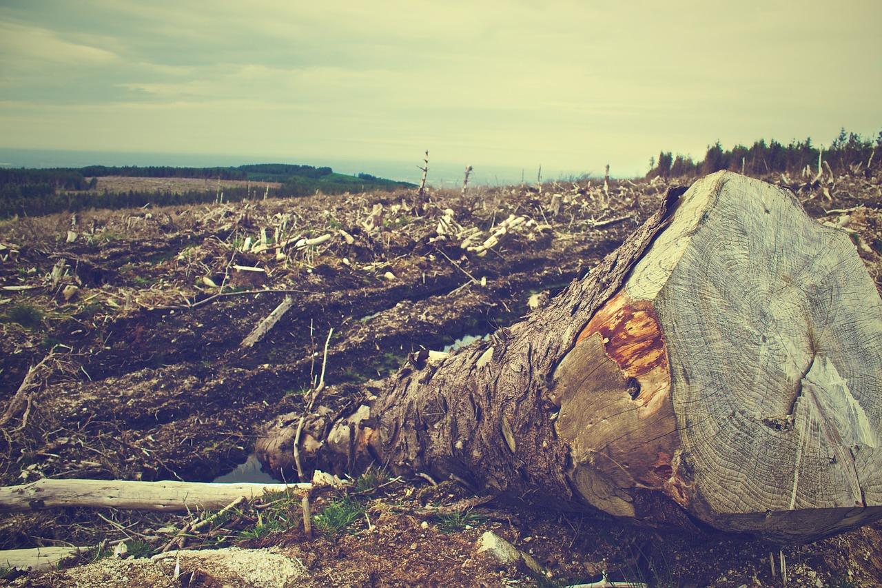 deforestation-405749_1280.jpg