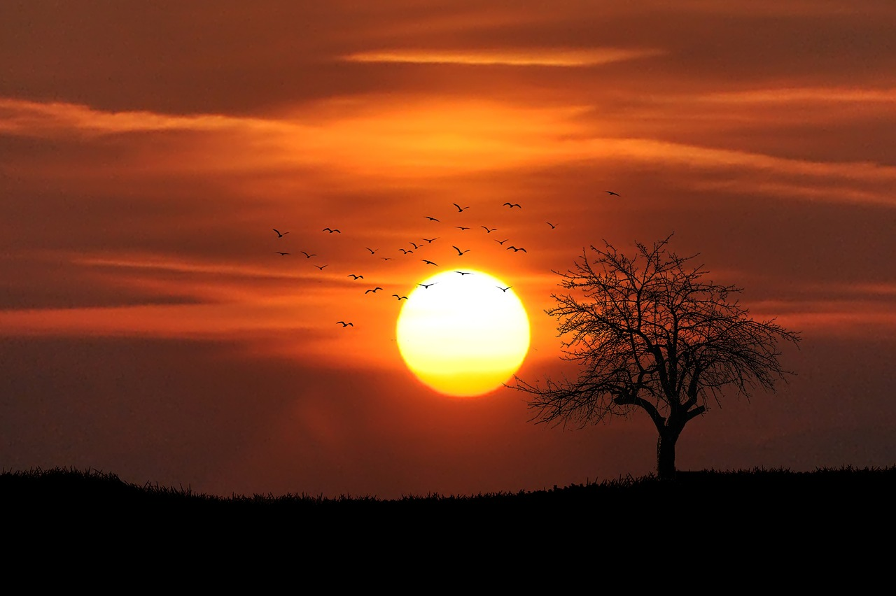 sunset-742744_1280.jpg