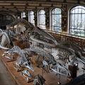 Őslénytani és Összehasonlító Anatómiai Galéria
