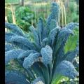 A felejtős növények