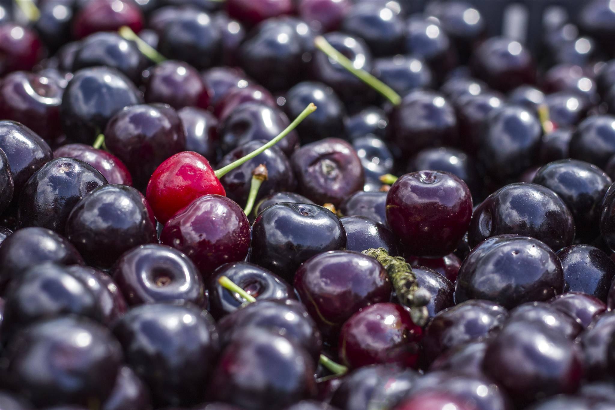... amikor még a láda éretlen gyümölcsöt és ágakat is tartalmazhat...