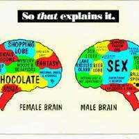 """""""Miért nem képesek többfelé figyelni a férfiak, és miért nem tudnak eligazodni a térképen a nők?"""""""