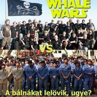 A bálnákat lelövik, ugye?