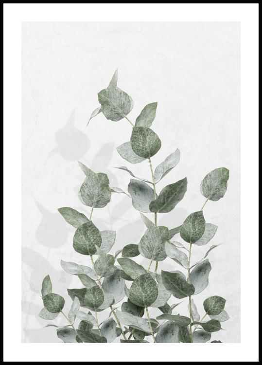 eucalyptus-wall.jpg