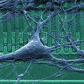 Szakajánló sorozatunk: Pázmány molekuláris bionika képzés