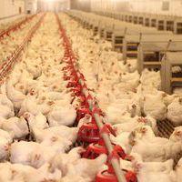 PB-gáztartály a megoldás állatnak, növénynek - Biztos az ellátás egész évben