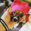 #hellovilag #helloworld  #pcasdogrescue