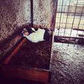 #akoborkutyaksorsa #rescueme #streetdogs #pcas