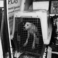 #állatmentés#rescue#