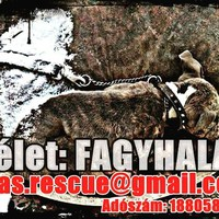 Bejelentések: pcas.rescue@gmail.com http://pcas.blog.hu/  #fagyhalál #