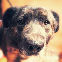 Esperance #fogadjörökbe  #adoptdontshop  #pcas  pcas.rescue@gmail.com