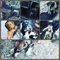Ma délután 8 kutya szabadult a hajdúhadházi ebrendészeti telepről. Köszönjük az atvevő szervezetek segítségét! Jövő heten újabb 9 kutya menekül, a mi gondozasunkba 7 kerül közülük, de már is van 9 új befogott és régebbiek is maradtak bent..... #gyepmesteritelep #megelozes #ivartalanítás #pcas