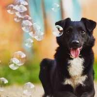 Leo egy a több ezer mentett és gazdás kutyáink közül ;) #adoptdontshop  #killingstationrescue  #totungstationrettung
