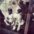 #mentsmeg  #rescueme