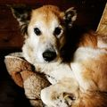 Love the old dogs #öreg #kutya #szeretem #
