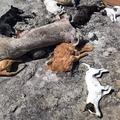 """"""" A kutyákat megölik ugye?"""" Bács -Kiskun megyei horror"""