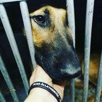 Live Love Rescue #dogrescue  #hungariandogrescue