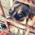 #givemeachance  #help  #rescue  #adopt