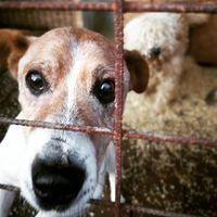 Szeretem az öreg kutyákat #lovetheolddogs #fogadjorokbe #
