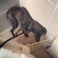 #állatmentés #rescue  #fear #adoptdontshop
