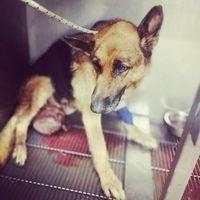 #rescue #chance  #pcasdogrescue  #pcasállatmentés