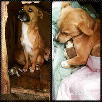 #gyepmesteritelepről #rescue #rettung #pcasdogrescue