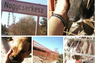 """Persze ezt a települést is """"megnyertük"""". Folyamatosan mentjük innen is a befogott kutyákat az önkormányzati kennelekből..... #rescue  #hungariandogrescue  #pcas"""