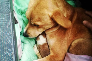 """""""Az állatok érezni, szenvedni és örülni képes élőlények, tiszteletben tartásuk, jó közérzetük biztosítása minden ember erkölcsi kötelessége."""" #motherhood #pcasrescue"""