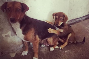 #love  #live  #rescue #pcasdogrescue