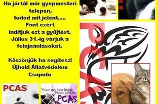 Adománygyűjtés a gyepmesteri telepek állatainak!