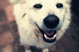 Lizi #fogadjörökbe  #adoptdontshop  #pcas  #hungariandogrescue #killingstationrescue pcas.rescue@gmail.com