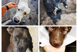 Segíts a beteg állatainknak
