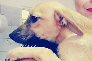 Kezdődik az élet :) légy boldog kicsi Floh! #adoptiert  #adopted  #goodbylittleboy