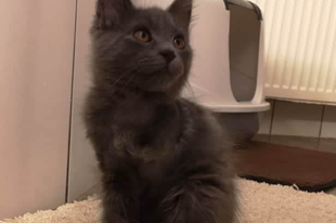 Frédi, a háromlábú cica