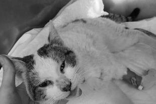R.I.P. A megmérgezett, mátészalkai cica