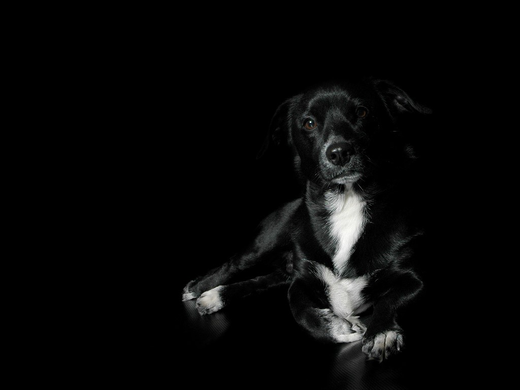 black-dog.jpg