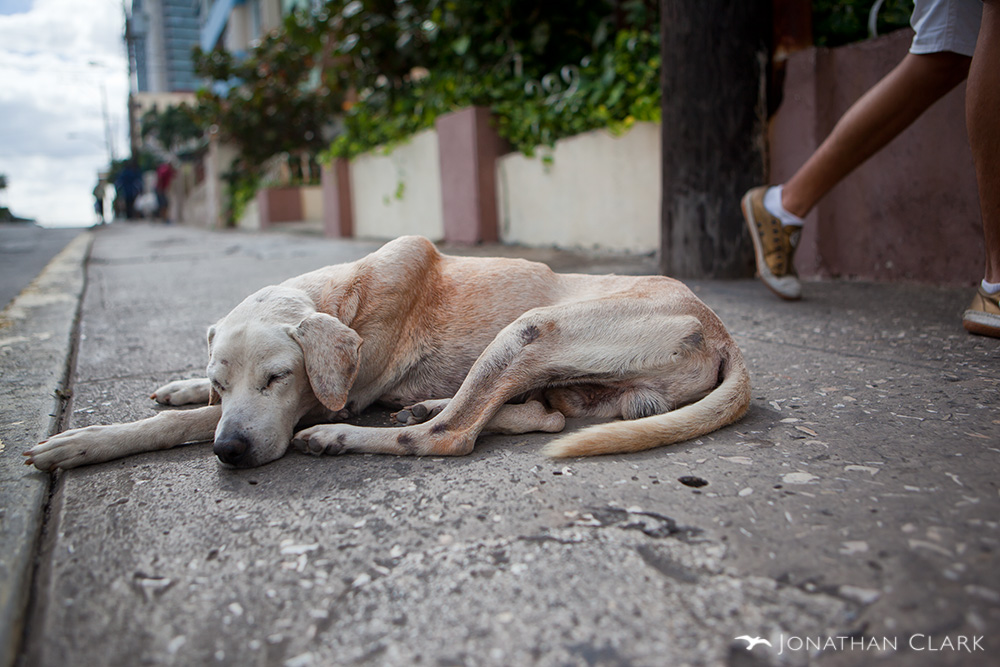 havana-cuba-sleeping-homeless-dog-photo-by-jonathan-clark.jpg