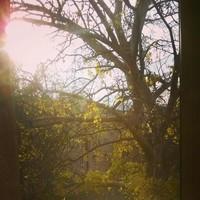 #winter #sunshine #beautiful #tree #chilli