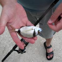 Horgászbottal Görögországban