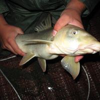 Folyami halak nyomában